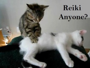 reiki-cat-300x229